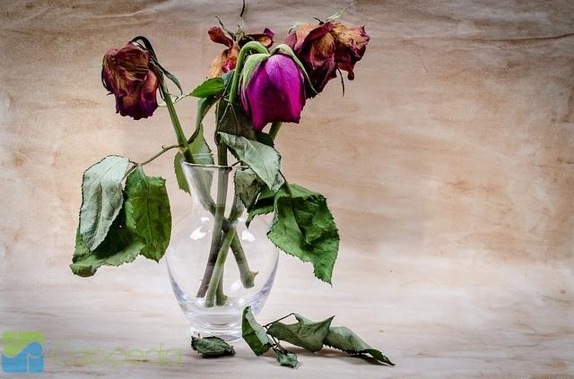 440+ Gambar Bunga Layu Keren Gratis Terbaru