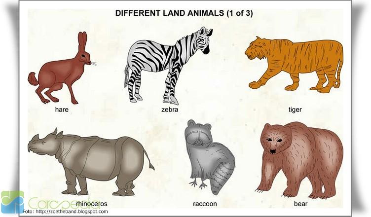 Bahasa Latin Tumbuhan Dan Hewan Beserta Gambarnya Daftar Nama Latin Hewan Ilmu Pengetahuan Carapedia
