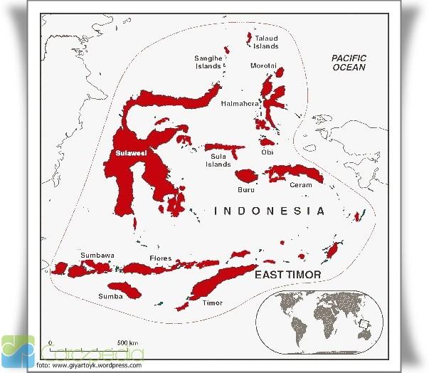 Flora dan Fauna Tipe Peralihan di Indonesia