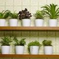 Tipe Sayuran yang Cocok Untuk Berkebun di Dalam Ruang