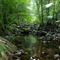 7 Lokasi Hutan Hujan Selain di Indonesia