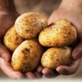 Perhatikan Cara Menyantap Tiga Makanan Ini