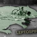 Kenali Bahaya Kencing Tikus Saat Musim Banjir