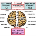 Otak Tengah dan Potensi yang Tersembunyi