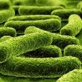 Mengintip Manfaat Tersembunyi dari Prebiotik