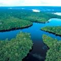 Mengenal Hewan Penghuni Sungai Amazon